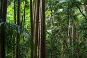 Keajaiban Alam, Hutan-Hujan-Gondwana
