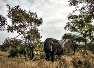 Keajaiban Alam, Kruger-National-Park