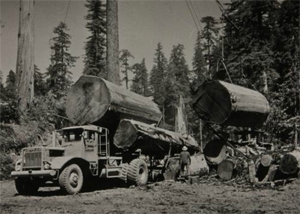 Penampakan Raksasa, Pohon-Redwood